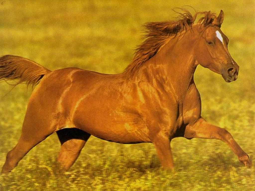 caballo_corriendo